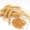 Целительные свойства пророщенной пшеницы