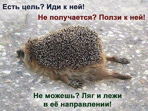 kak_dobitsja_celi