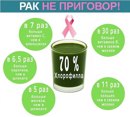 rostk_pshenicy